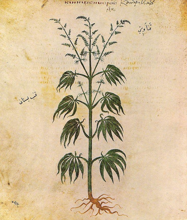 Ociando: La milenaria historia del cannabis medicinal