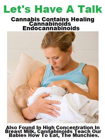 breast feeding cannabinoids cannabis in the jpg 853x1280