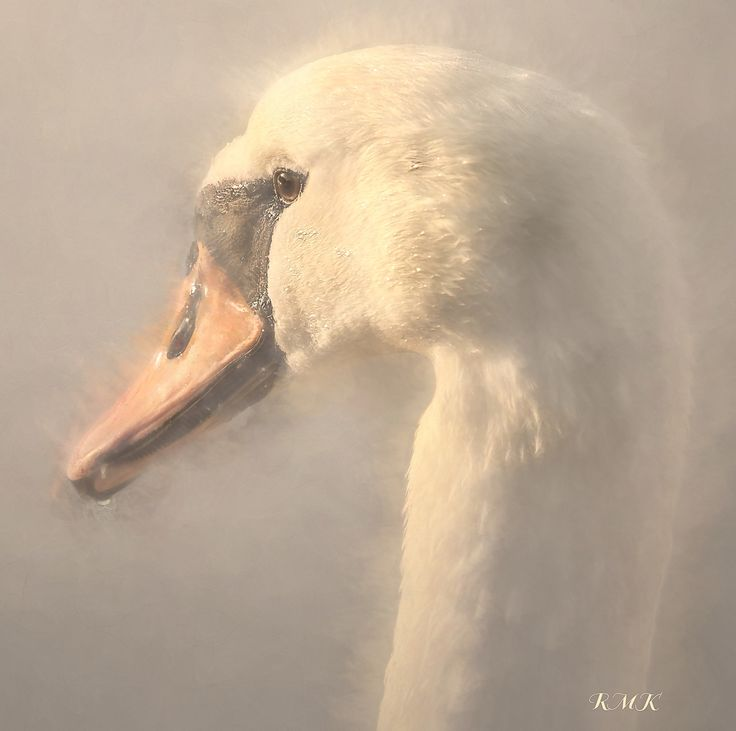 Purity - Swan