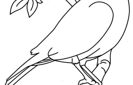 birds coloring pages for preschoolers - photo#15