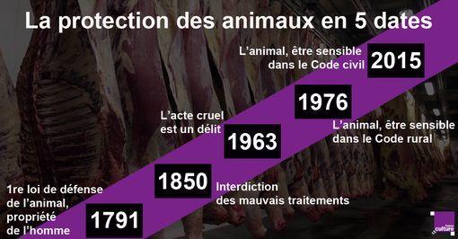 """La proposition de loi d'Olivier Falorni sur """"le respect de l'animal en abattoir"""" doit être votée ce jeudi 19 janvier 2017. Du statut de propriété de l'homme à celui d'être doué de sensibilité, cinq dates retracent l'histoire de la protection des animaux en France."""