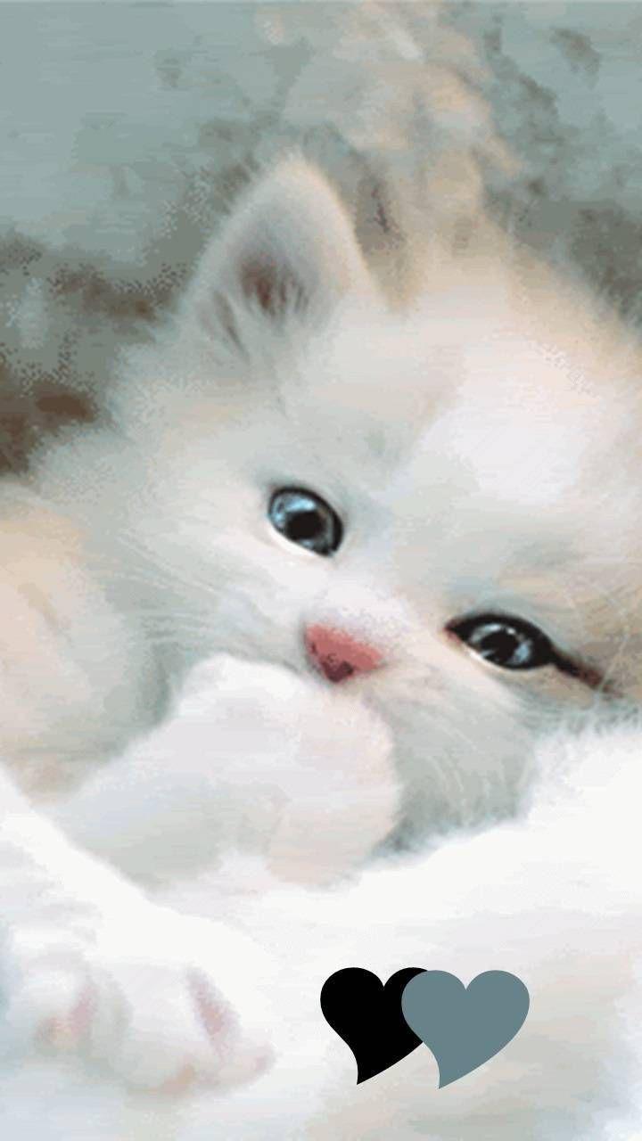 Download Cute Kitty Wallpaper By Roselie14 2f Free On Zedge