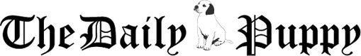 The Daily Puppy - awesome website full of alternatives to the vets suggestion for the bland diet. (since Bella doesnt seem to like rice!)