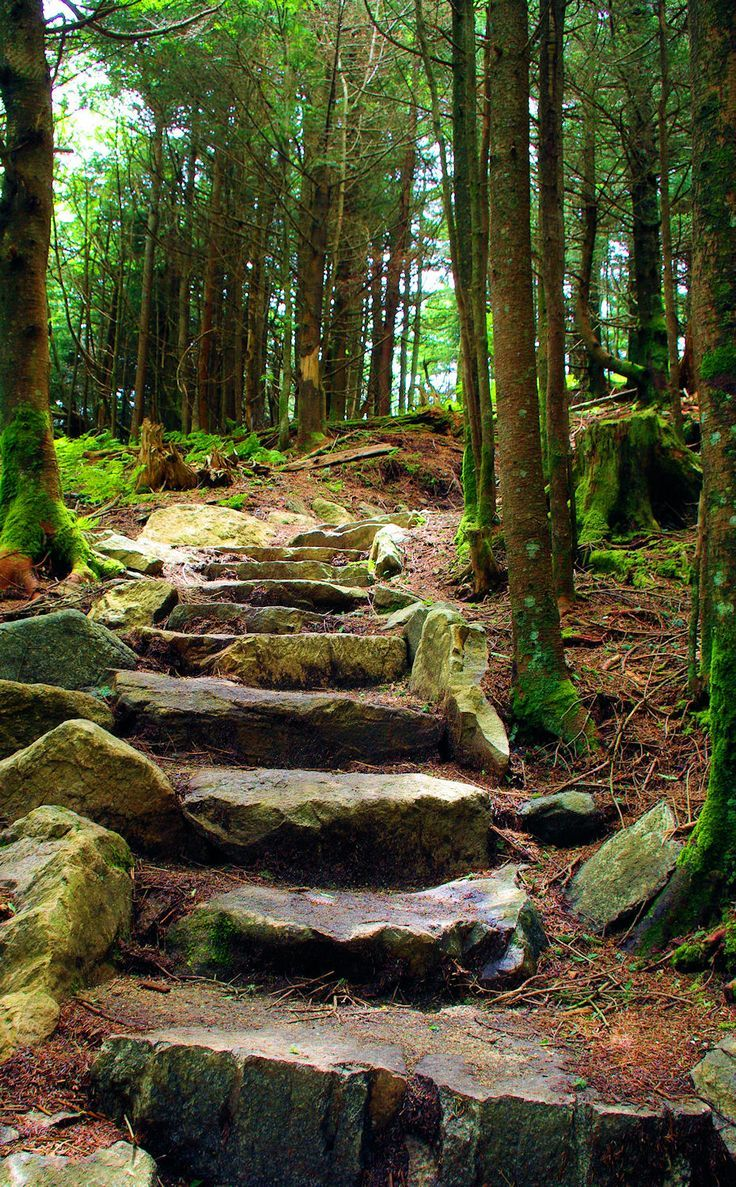 Hiking trail steps at Mt. Mitchell in North Carolina, the highest peak east of the Mississippi River.