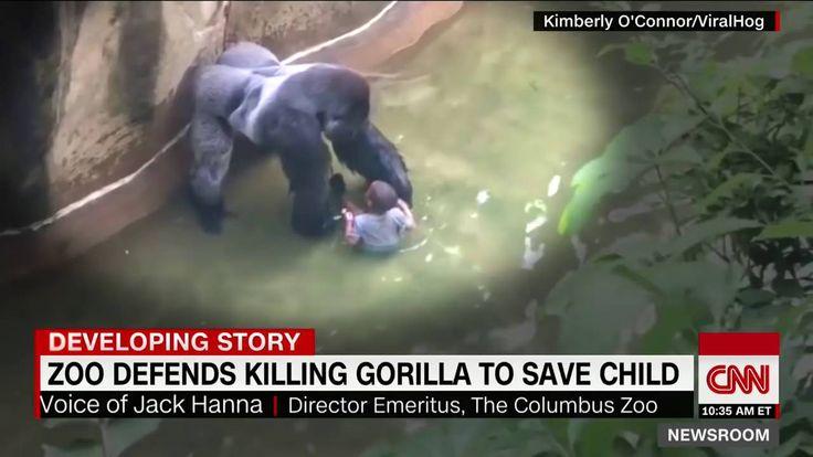 Горилла таскает ребёнка
