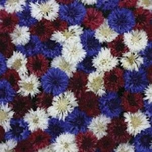 Find This Pin And More On Red White Blue Flowers