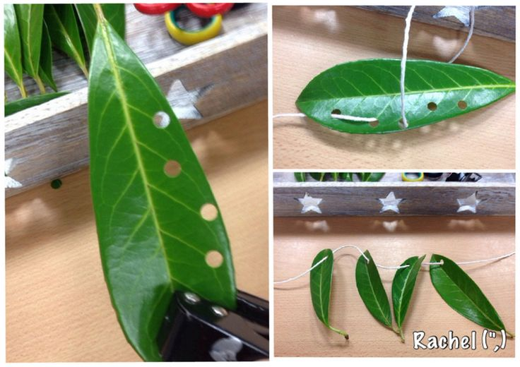 "Threading real leaves - from Rachel ("",)"