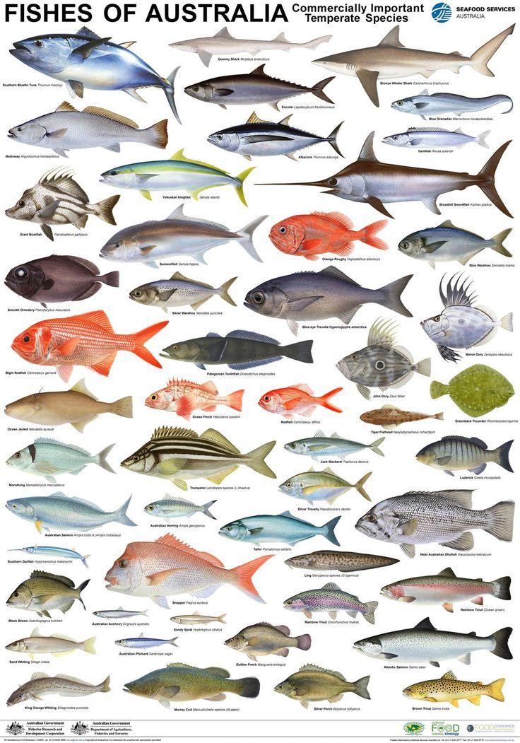 этой виды рыб с названиями и картинками пожелать тебе самого