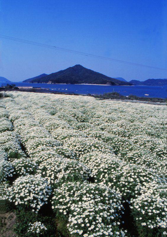Flower park Urashima. Looking for more information about Kagawa? Go Visit Kagawa Prefecture Tourism Association. http://www.my-kagawa.jp