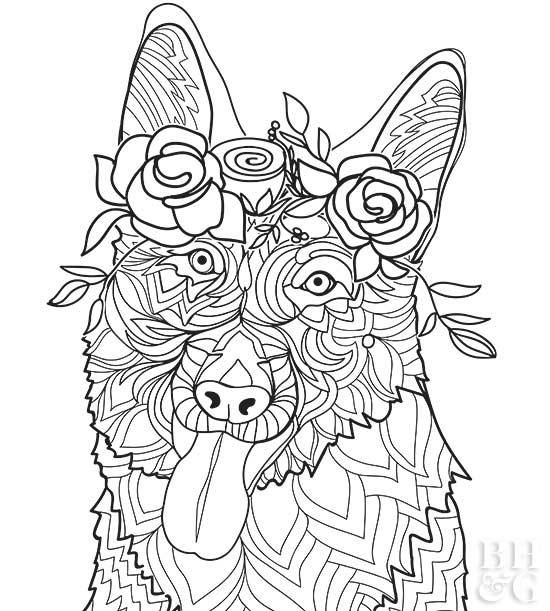 Here Are 24 Free Pet Coloring Pages To Help You Relax Dog