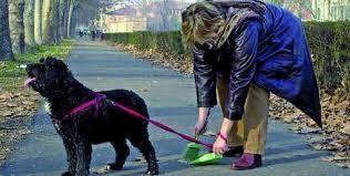 Scippa una vecchietta, ma in borsa c'è solo la cacca del cane :http://www.qualazampa.news/2016/03/30/scippa-una-vecchietta-ma-in-borsa-ce-solo-la-cacca-del-cane/