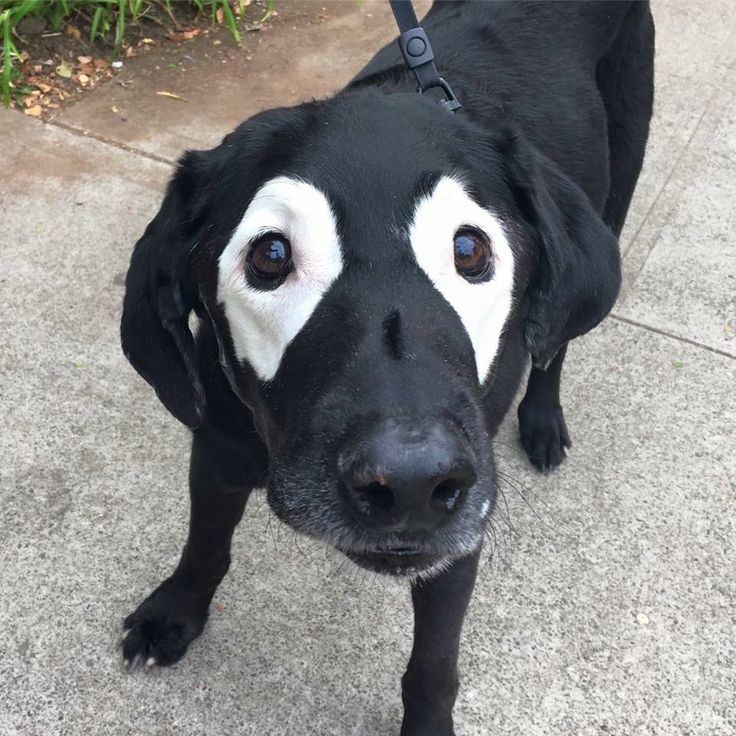 This dog was born with these unusual markings.
