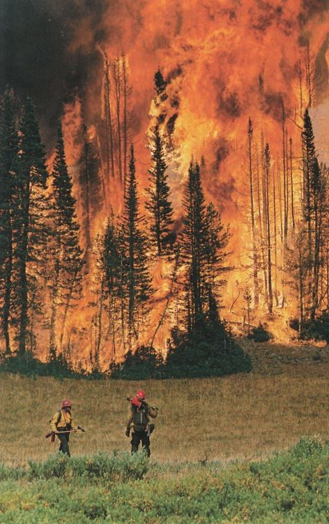 thanks, CO firefighters.Red Cards, Wildland Firefighters, Amazing Pictures, Forests Fire, Colorado, The Offices, Fire Fighter, Fire Rescue, Rain