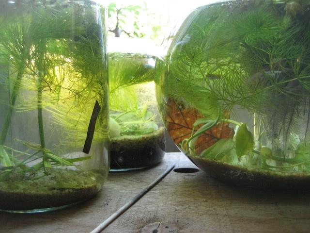 84 id es jardins aquatiques et terrariums choisies par grenouillebleue boule de mousse. Black Bedroom Furniture Sets. Home Design Ideas