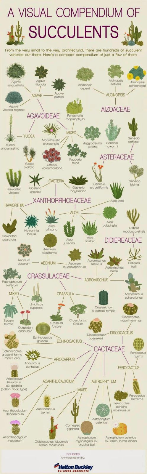 A Visual Compendium of Succulents by frommoontomoon #Infographic #Succulents