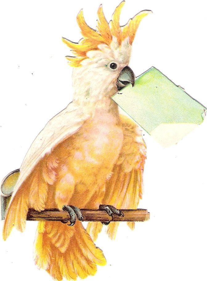Oblaten Glanzbild scrap diecut chromo Papagei 12cm  parrot Kakadul bird oiseau: