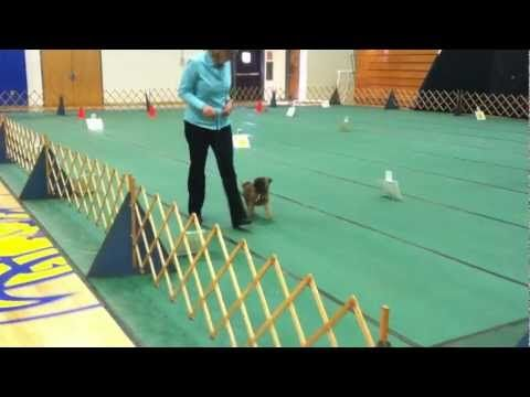 Dog Training Boarding School Nyc