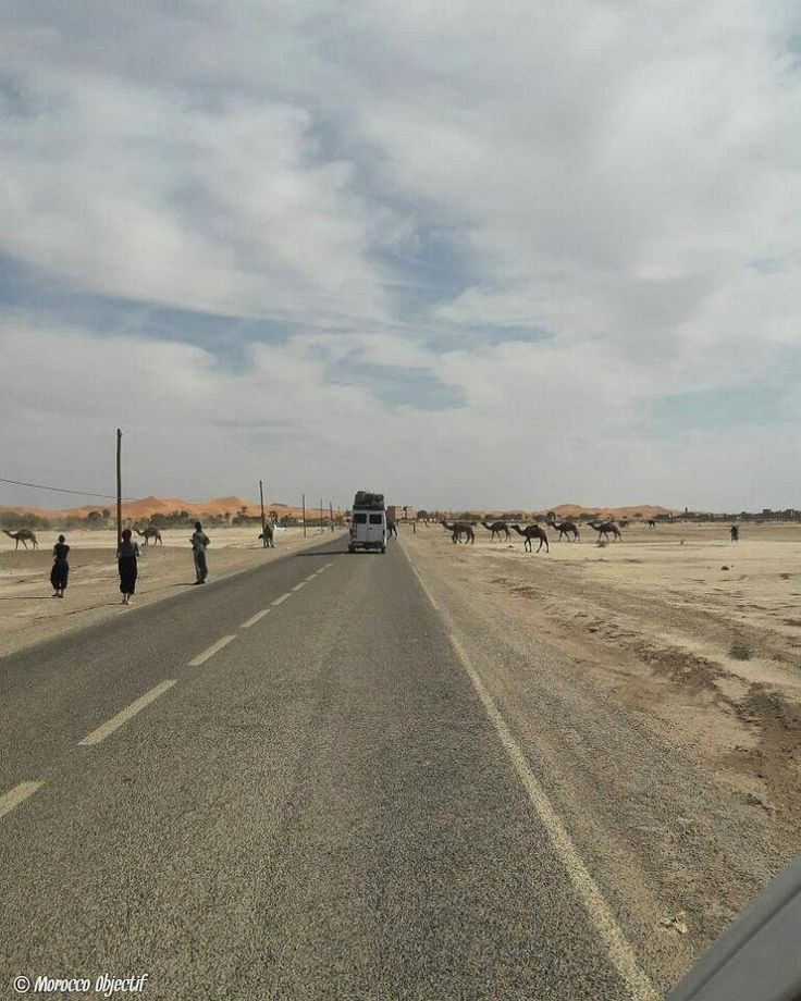 Dromedaries crossing the road...that is one thing you have to watch out for when going to Merzouga.  http://www.morocco-objectif.com/  #moroccoobjectif #merzouga #desert #sahara #dunes #dromedaries #camelride #cameltrek #roadtrip #nomad #berber #amazigh #africa #travel #travellife #instatravel #travelgram #instapassport #morocco #maroc #marruecos #marokko #marrocos #marocco   Morocco desert tours   Casablanca & Marrakech desert trips