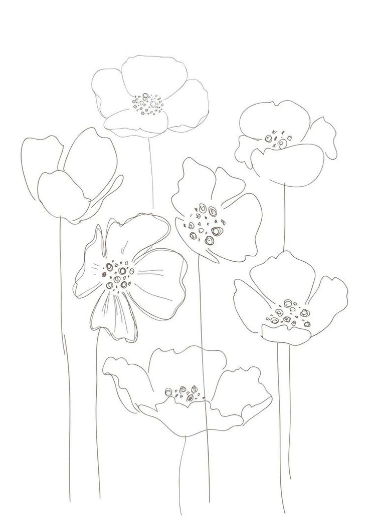 Poppies, would make a interesting string print