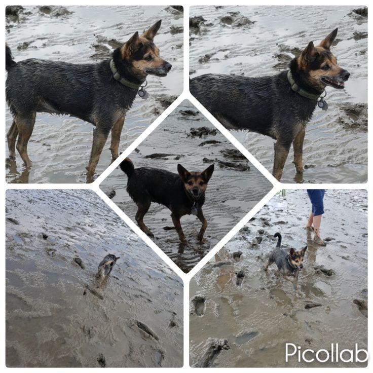 Hunde Foto: Sandra und Sissi - Juhu ich kann mich dreckig machen Hier Dein Bild hochladen: http://ichliebehunde.com/hund-des-tages  #hund #hunde #hundebild #hundebilder #dog #dogs #dogfun  #dogpic #dogpictures