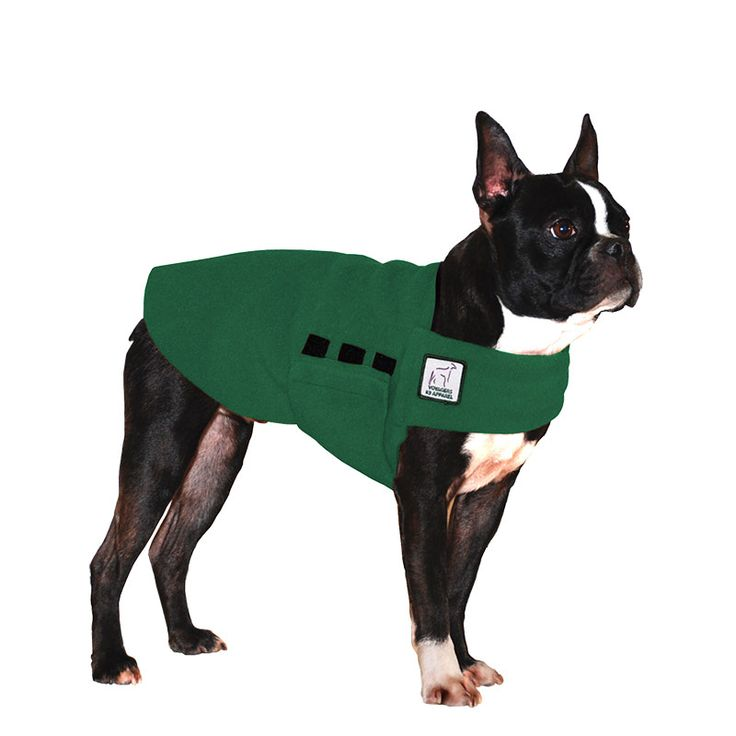 Green Boston Terrier Dog Tummy Warmer, great for warmth, anxiety and laying with our dog rain coat. High performance material. Made in the USA.