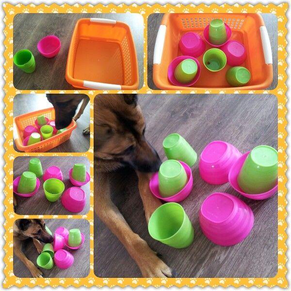 Spel 5 (hondenspel hond spel denkwerk hersenwerk brain dog game play diy)
