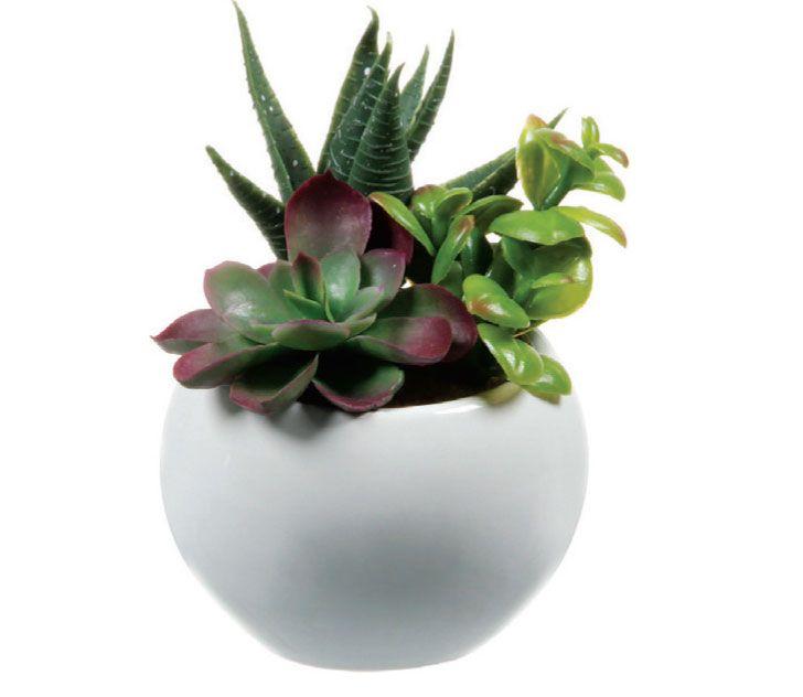 5 espécies de plantas para cultivar no banheiro - Casa Cláudia. Parecem de verdade, porém são de plástico do tipo polietileno as folhas que imitam suculentas no arranjo Terrarium Adorno. O vaso cerâmico, com 10 cm de diâmetro, pode vir em preto ou branco. Tok Stok, R$ 26,90.