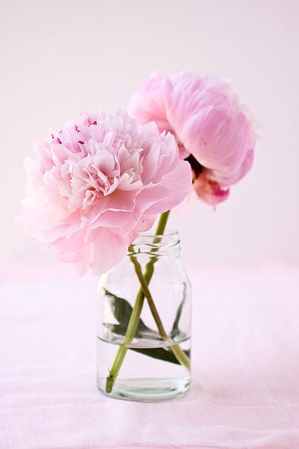 Oregon Bride's flower of the moment: pretty peonies.  With dahlias in summer?