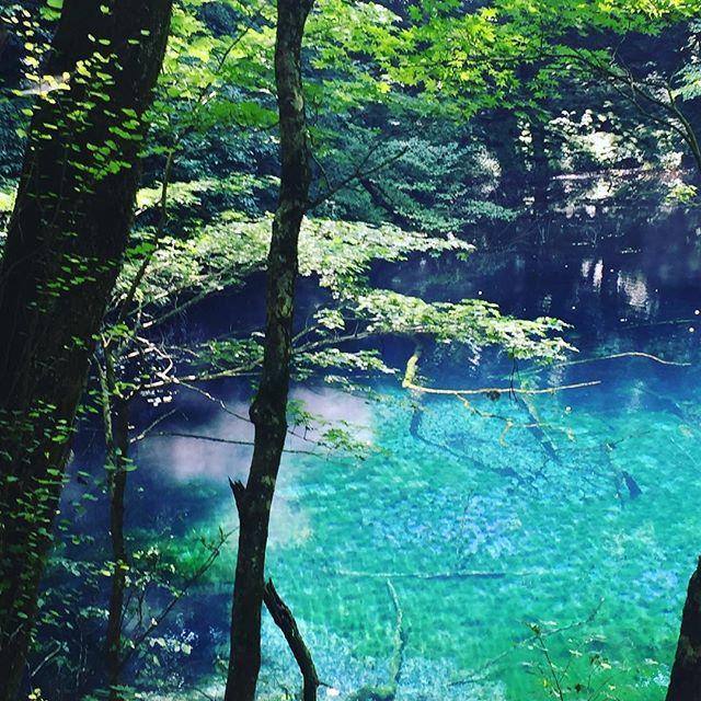 【kakkeman.energy】さんのInstagramをピンしています。 《青池から少し離れた#沸壺の池  こちらも青池に劣らず美しい #神秘的  #池 #十二湖 #森林 #木々》