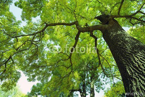"""Descargue la foto libre de derechos """"Forest trees"""" creada por Andrey Volokhatiuk al precio más bajo en Fotolia.com. Explore nuestro económico banco de imágenes para encontrar la foto perfecta para sus proyectos de marketing."""