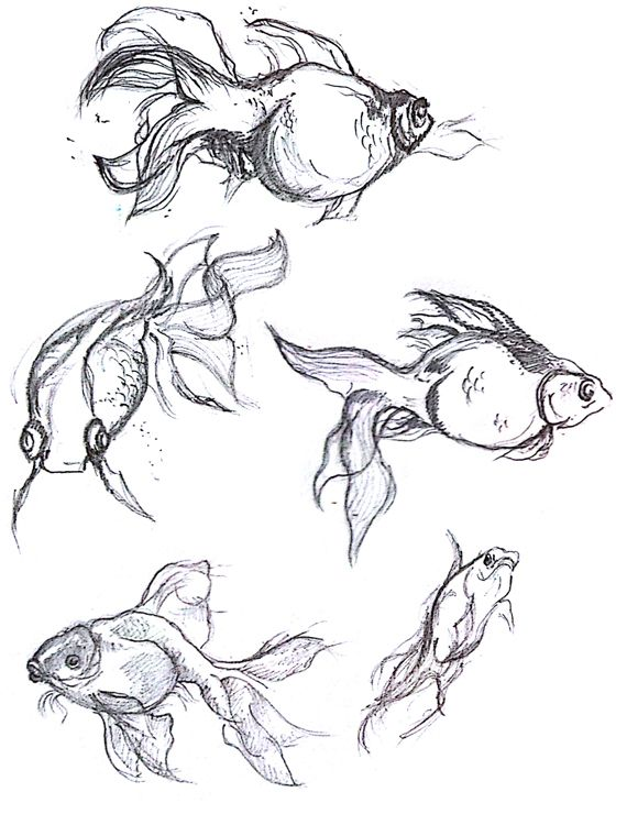 Pencil Drawings of Fish | Dancing with Fish - Pencil Drawing