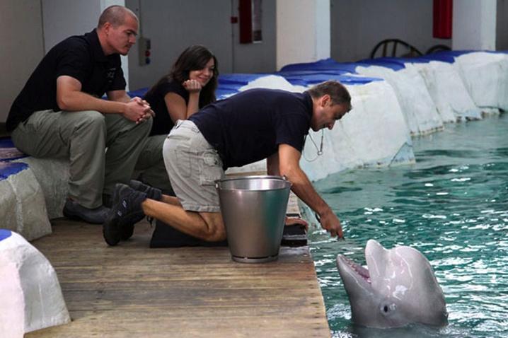 """En la actividad """"Entrenador por un día"""" tienes la oportunidad de acercarte como nunca a los mamíferos marinos."""