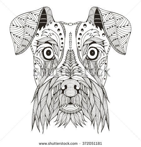 Schnauzer dog head zentangle stylized, vector, illustration, freehand pencil, hand drawn, pattern. Zen art. Ornate vector. Lace.