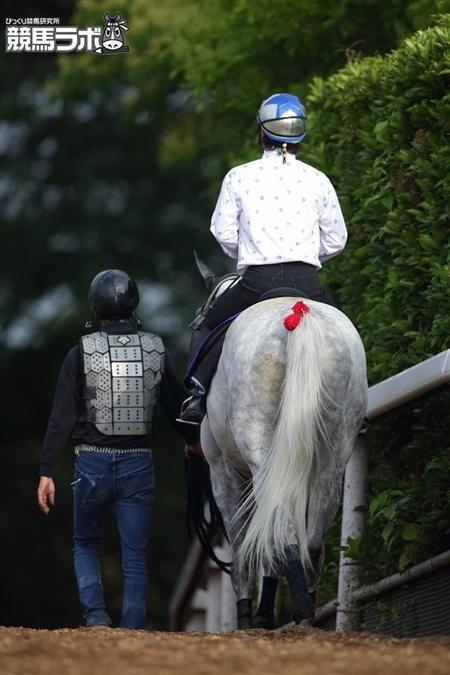 【PHOTO】後ろからゴールドシップさん http://keibalab.jp/topics/27439/ #競馬 #keiba #宝塚記念