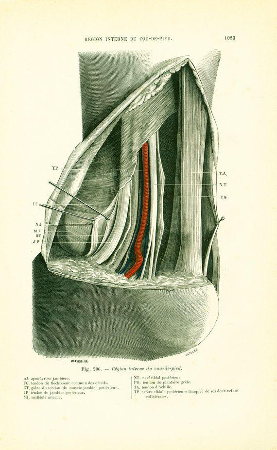 1897 Pied région interne du coup de pied Planche Originale Anatomie Chirurgie P. Tillaux 19ème siècle