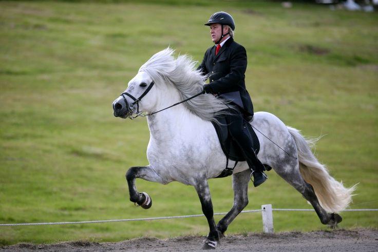 HorseTravels biedt reizen aan naar IJsland. Tijdens deze reis wordt zoveel mogelijk geprobeerd om iedereen op een IJslander te laten rijden. In dit blogartikel