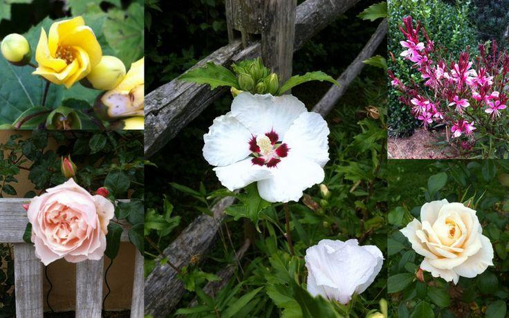 fleurs de septembre les fleurs du domaine pinterest fleurs de septembre fleur du jardin. Black Bedroom Furniture Sets. Home Design Ideas