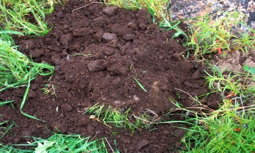 5 Different Soil Types – Know Your Soil Type