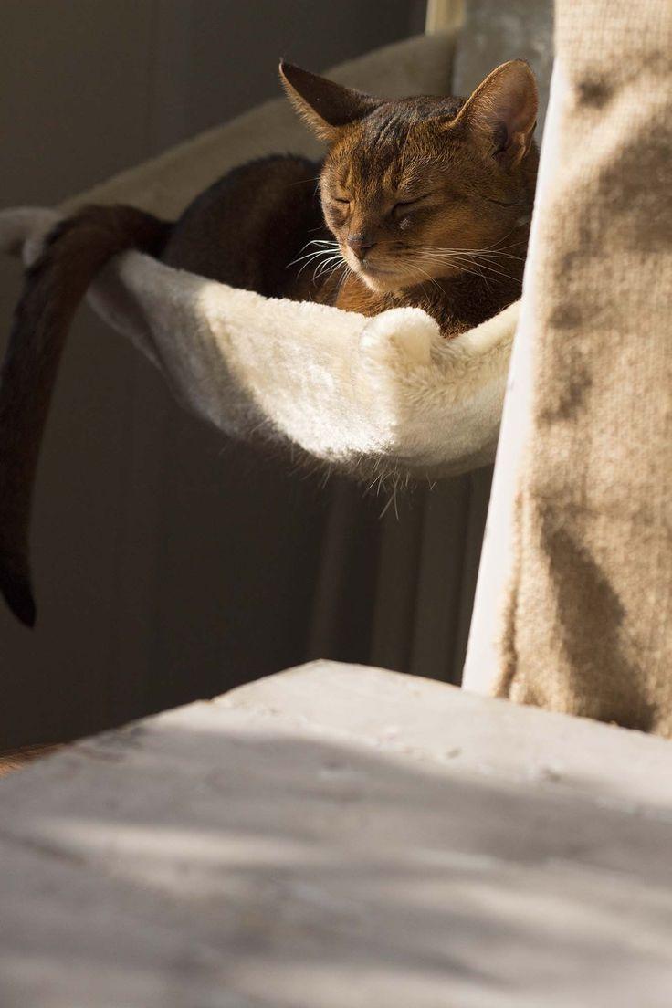 Hvis din kat hoster - og noget om Jaras radiatorseng
