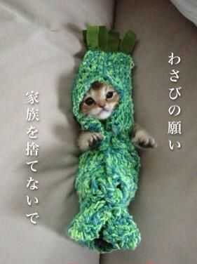 """Wasabi - A little kitten rescued when she was being attacked by a raven and named """"Wasabi """". Grandma keeps knitting crochet costumes for Wasabi since she doesn't like to eat from tube and tries to push it away (she has holes in her mouth because of the attack and she can't eat food nomally still. But she's in recovery now). This costume is """"Wasabi"""" the Japanese horseradish shaped one :)"""