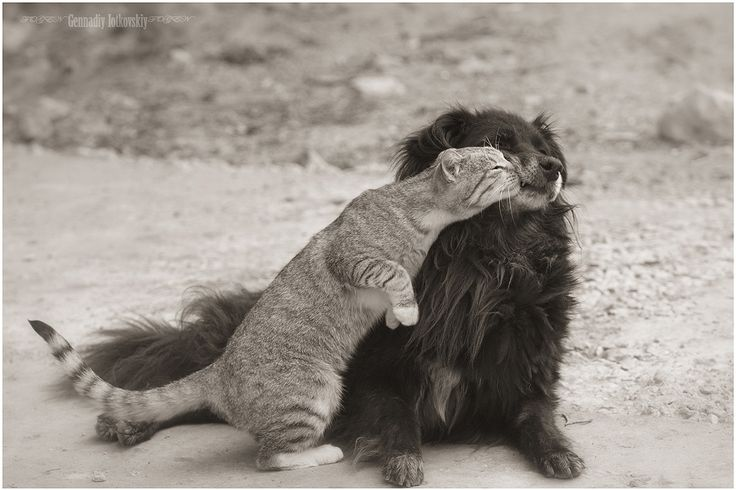 kitty <3's doggy