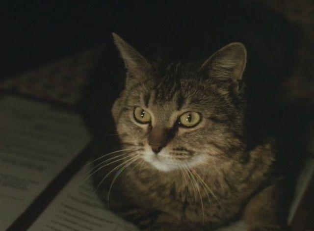 The Dark Wind 1991 Cats Pets The Darkest