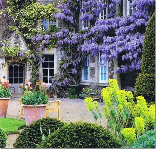 Wisteria Courtyard, Bath, England: Flowers Gardens, New Houses, Gardens Houses, Purple Flowers, Outdoor, Beautiful, Gardens Wall, Bath England, Wisteria Courtyards
