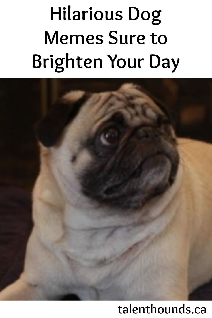 1014 best images about Funny dog pictures on Pinterest ...