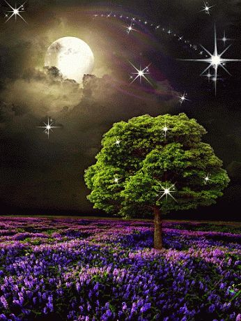 Coisinhas da TecaEuzebio: B♥a N♥ite...até amanhã♥ Paz e Luz!