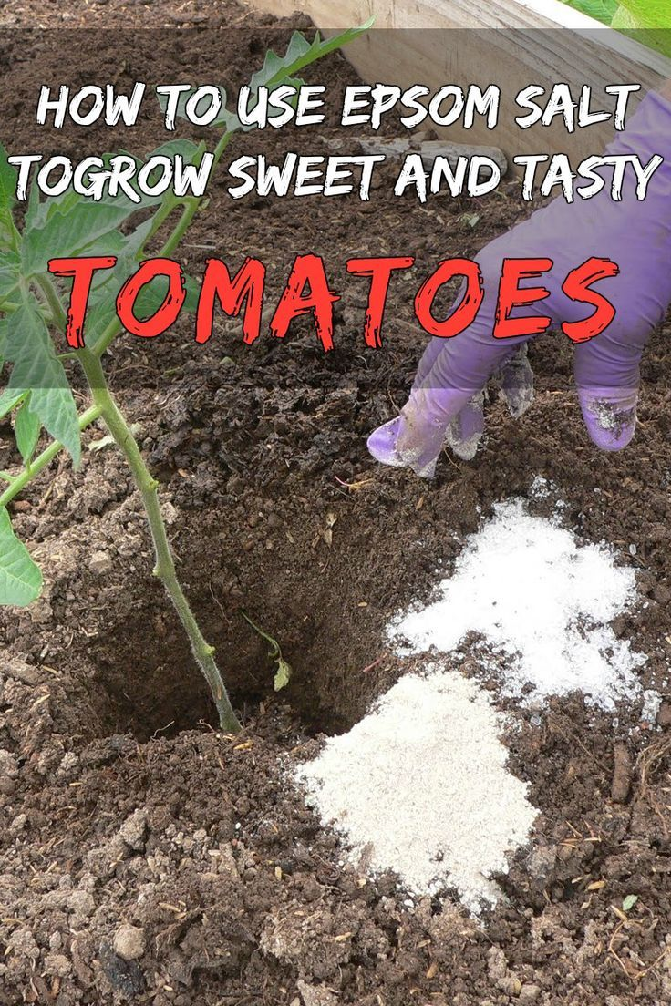 Best 25 epsom salt for tomatoes ideas on pinterest - When to fertilize vegetable garden ...