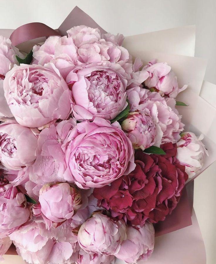 Цветы пионы фото красивые картинки потом