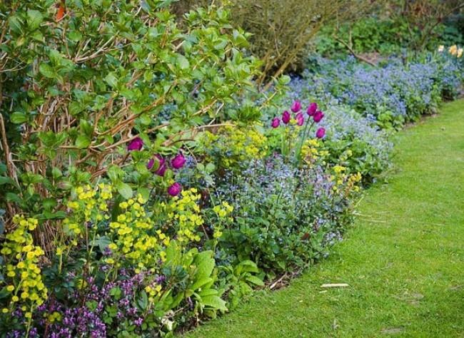 62 best fleurs vivaces de jardin images on pinterest flowers garden gardening and beautiful - Fleurs de jardin vivaces ...