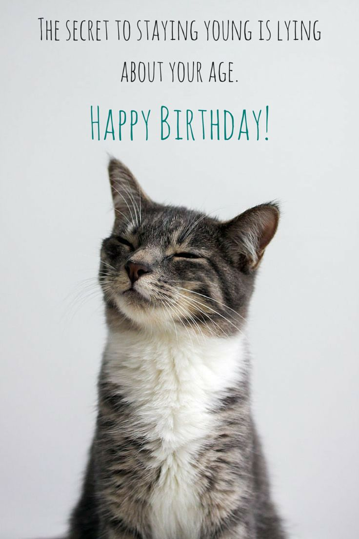 367 best Happy Birthday images – Cat Birthday Greetings