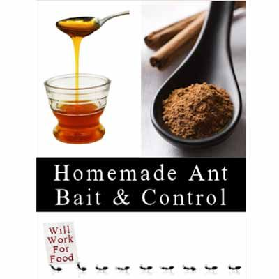 How To Make Homemade Ant Killers: Recipes and Tips